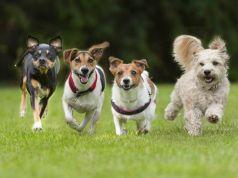 जानिए! कुत्तों से जुड़े कुछ रोचक तथ्यों के बारे में|