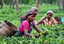 आखिर आँकड़ों से बाहर क्यों है स्त्री-श्रम?