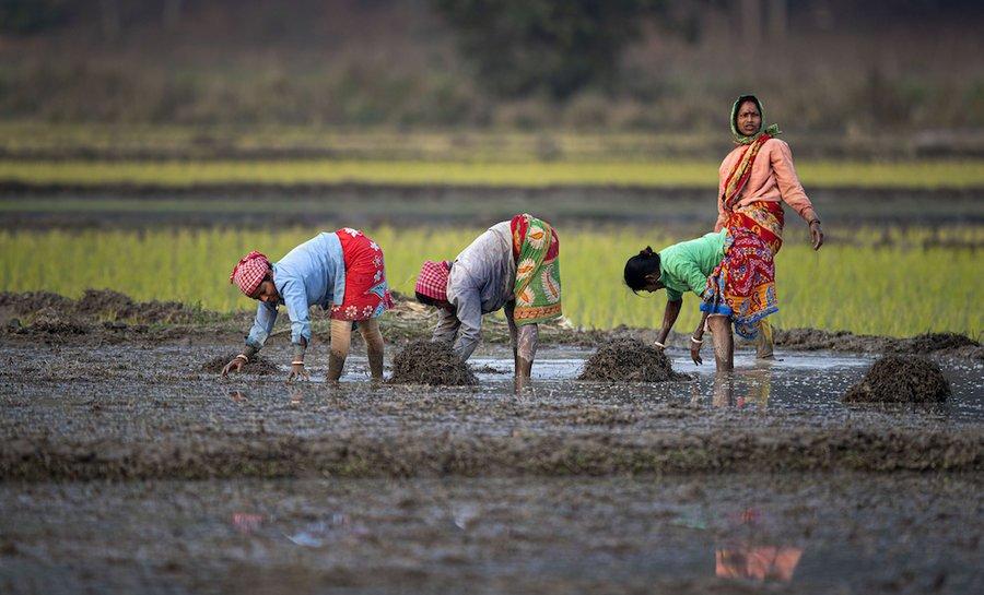 राष्ट्रीय महिला किसान दिवस: महिलाओं के पास क्यों नहीं है ज़मीन का मालिकाना हक़?