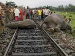 गणेश जी के देश में रेल पटरियां पर कटते हाथी   Elephants facing death on  rail tracks - Hindi Oneindia