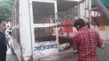 many dogs died in ghaziabad