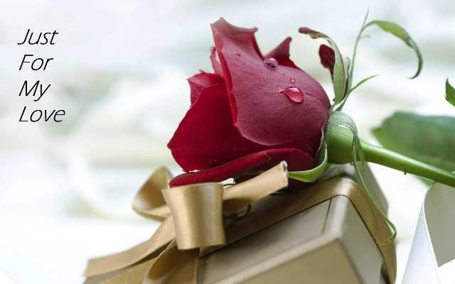 दोस्ती हो या प्यार.. रोज डे पर सबको दें गुलाब!