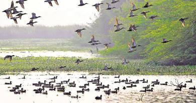 okhla bird sanctuary