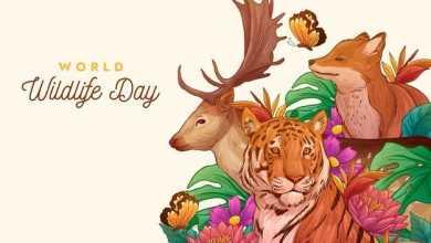 World Animal Welfare Day