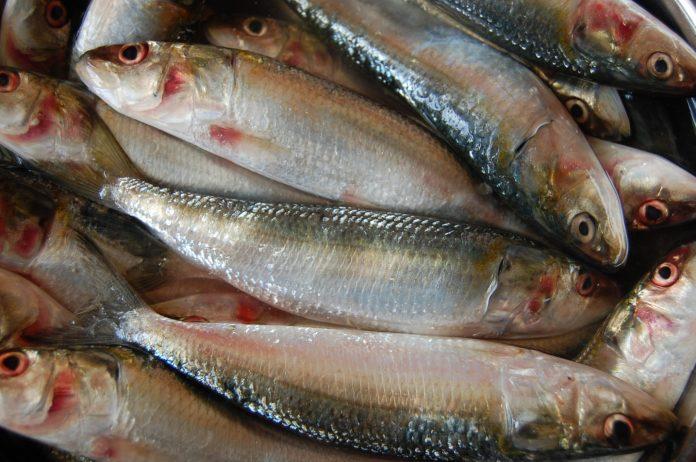 मछलीपालन