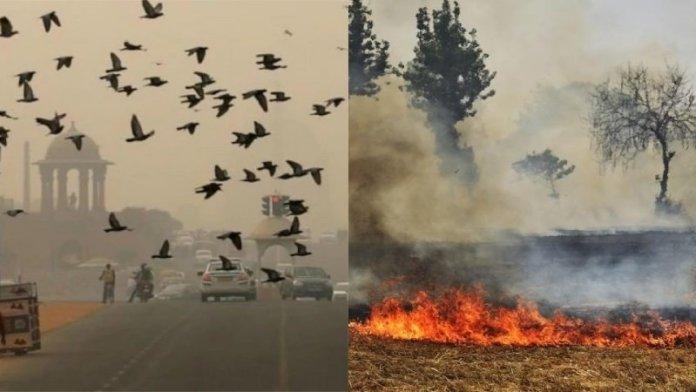 दिल्ली प्रदूषण, पराली जलाना
