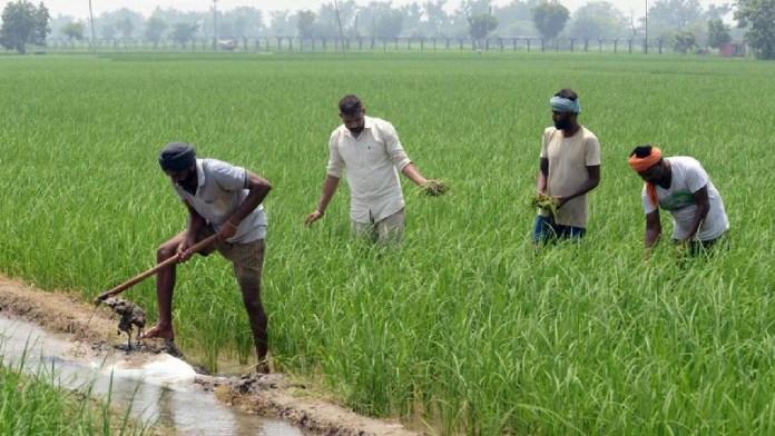 कृषि कानूनों, मोदी, अफवाह