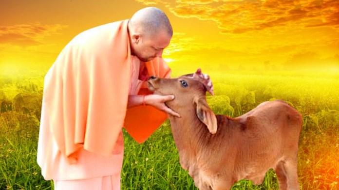 योगी, गायें, गरीब परिवारों