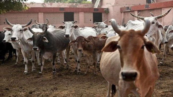 राजस्थान गौशाला गाय मौत