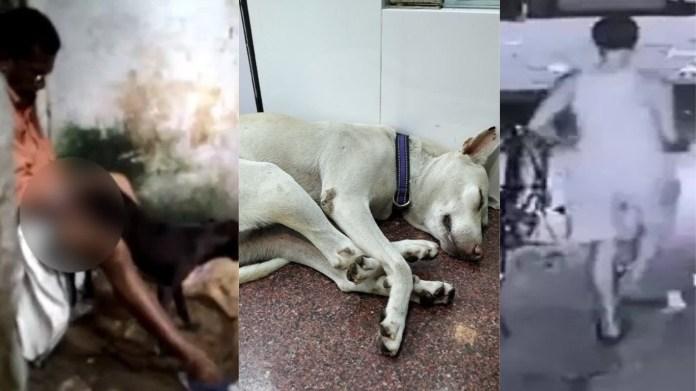 मुंबई, जानवर, यौन उत्पीड़न