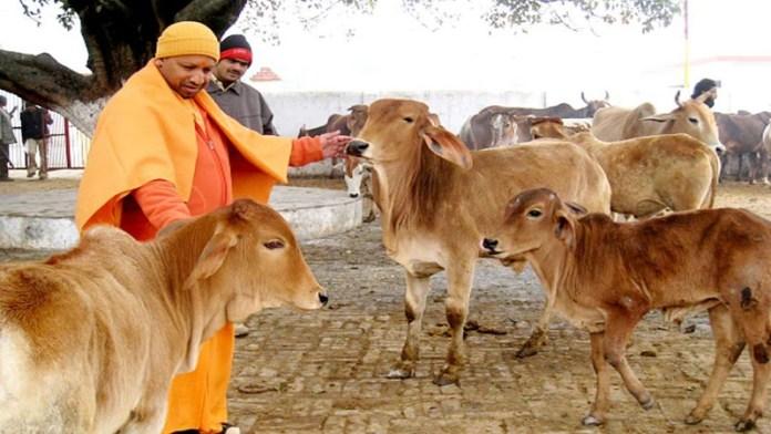 दूध उत्पादन, यूपी