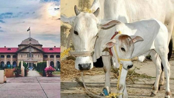 गाय, इलाहाबाद हाईकोर्ट, राष्ट्रीय पशु