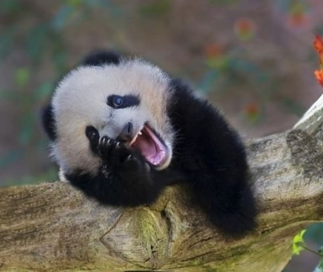 21Animals Who Can Cheer You UpBetter Than Any Comedian