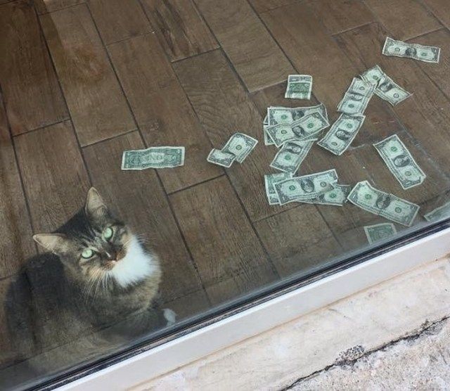 A Cat Was Brought Into an Office to Get Rid of Mice, but Started to Bring in Money Instead