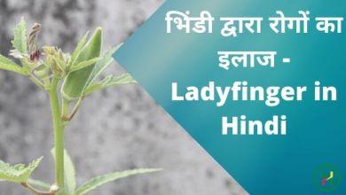 Photo of भिंडी द्वारा रोगों का इलाज – Ladyfinger in Hindi