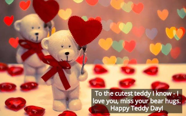 टेडी दी -1