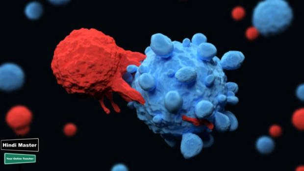 lymphocytes meaning in hindi