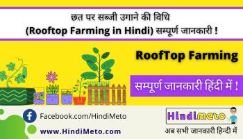 छत पर सब्जी उगाने की विधि _ - Rooftop Farming in Hindi