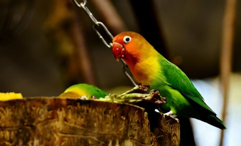 lovebirds-2895827_960_720.jpg