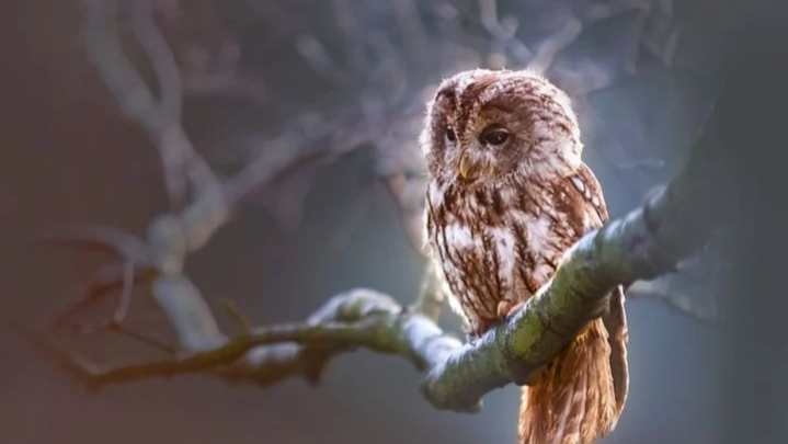 Owls amazing facts in hindi