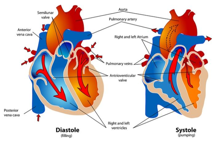How does work heart in hindi