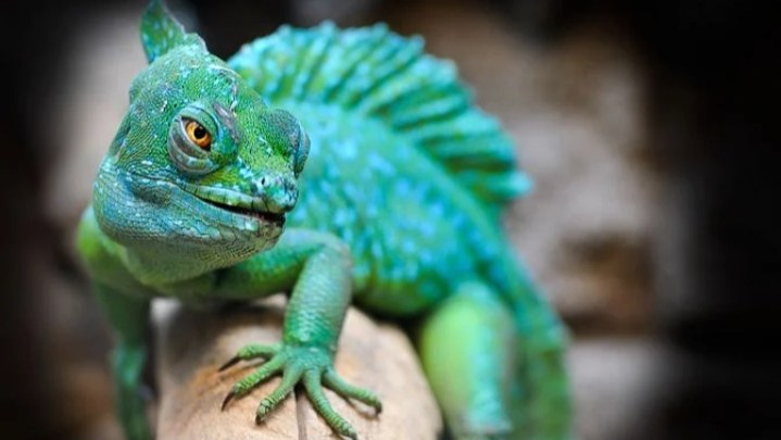 Read more about the article सरीस्प वर्ग (Reptiles meaning in hindi) का हिंदी मतलब क्या है, (Reptiles name in hindi)