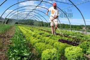 Read more about the article सिक्किम में जैविक खेती एक भुलावा