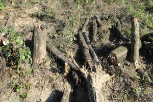 Read more about the article हिमालय के वन और वन्य जीव संकट में