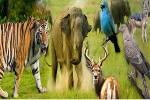 Read more about the article जैव विविधता भारत की धरोहर है
