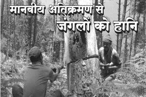 Read more about the article मानवीय अतिक्रमण से जंगलों को हानि