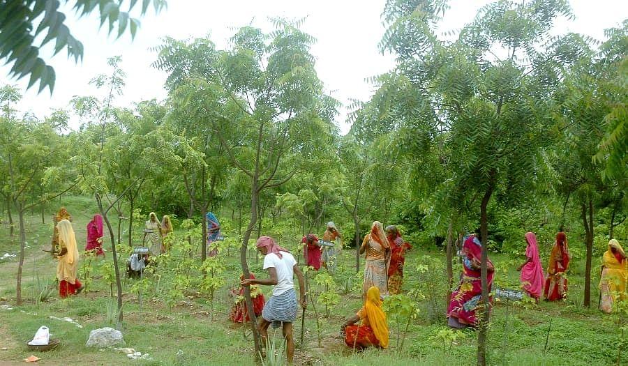 इस गाँव के सरपंच ने चलाया ऐसा मुहीम, गाँव वालों से लगवाए 5 लाख से ज्यादा पौधे, हर लड़की के नाम है लाखो की एफडी