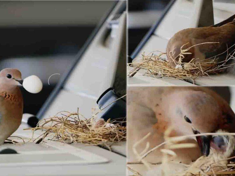मर्सीडीज में चिड़िया ने दिए अंडे, दुबई के प्रिंस ने कहा- बच्चों के बड़े होने तक नहीं चलेगी कार