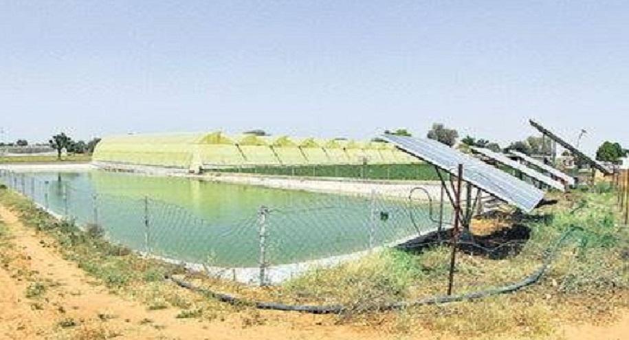 राजस्थान को बनाया मिनी इजरायल, 1 करोड़ रुपये की है सालाना कमाई