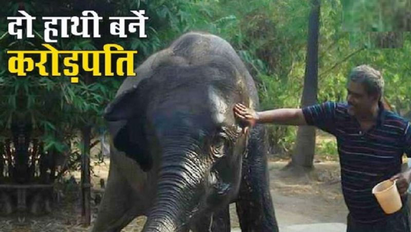 हाथी काका