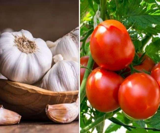 Garlic And Tomato Price: टमाटर की कीमतों में आई गिरावट के बाद जानिए क्या है अब लहसुन की कीमत