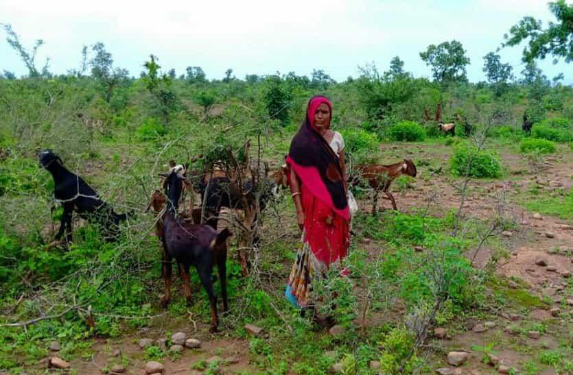 कभी लाल बत्ती में घूमा करती थी ये महिला, आज जीवनयापन के लिए चला रही है बकरियां