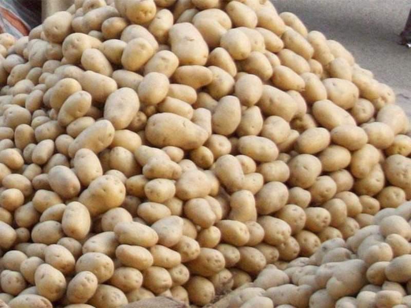 Potato Price :आलू की कीमतों में आया भारी गिरावट, जानिए क्या है नई कीमत