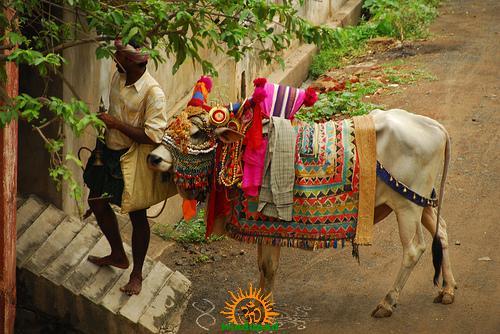 gangireddu-with-haridasu
