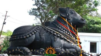 Huge Nandi on the Way to Chamundeshwari Temple in Mysore