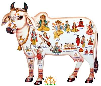 Gaumata – Cow Slaughter in India