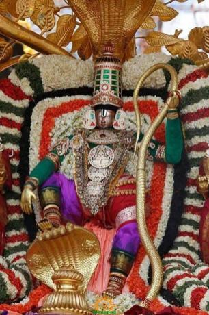 5 Kalpavriksha Vahana Seva TTD Brahmotsavam