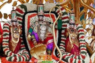 7 Kalpavriksha Vahana Seva TTD Brahmotsavam