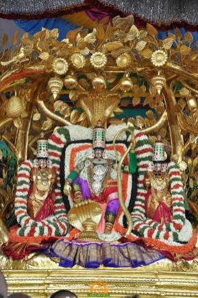 8 Kalpavriksha Vahana Seva TTD Brahmotsavam
