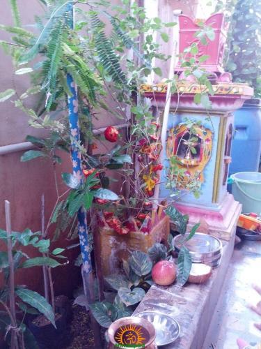 Tulsi Damodar Vivah in Kartik Month