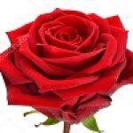 cropped-rose-02-124×100-1.jpg