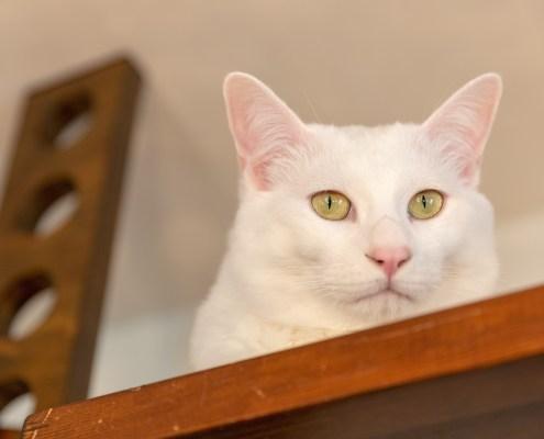 1904_ieny記事取材撮影_無重力猫ミルコ