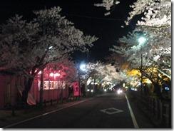 村松夜桜2014