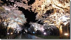 村松公園桜ライトアップ