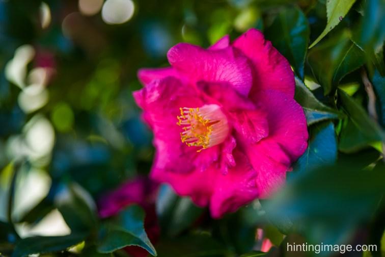 Red Flower side 2