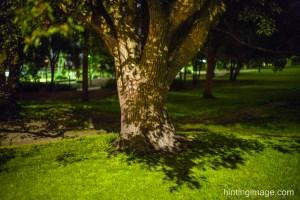 Night Tree 1
